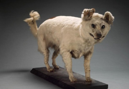 extinct dog breeds