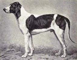 Billy Dog Breed.jpg